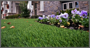 synthetic turf for lawns and landscapes